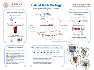 RNA Structural and Systems Biology